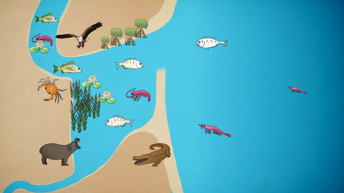 How an estuary works infographic